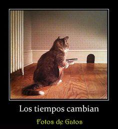 Fotos de Gatos: Los tiempos cambian. Fotos divertidas de gatos