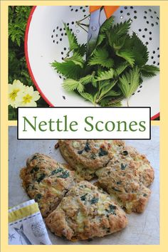 Forage, cook, eat. What to do with a bagful of stinging nettle leaves. A recipe for scones with nettles, chives and cheese.