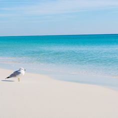 Admiring the beauty of the Emerald Coast at Sandestin Golf and Beach Resort located in South Walton, FL. Join us here for your next beach vacation!