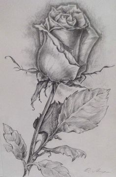 2 Healthful Breakfast Recipes For Fat Reduction: Delectable Sha Bang Eggs And Do-it-yourself Muesli - My Website Realistic Flower Drawing, Beautiful Flower Drawings, Pencil Drawings Of Flowers, Realistic Pencil Drawings, Dark Art Drawings, Flower Sketches, Tattoo Design Drawings, Pencil Art Drawings, Art Drawings Sketches