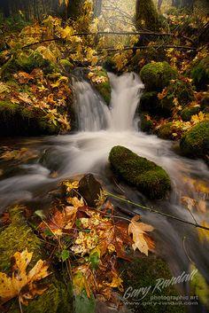 Still Creek Autumn by Gary Randall ~ This is a side creek that flows into Still Creek near Mount, Hood, Oregon.**