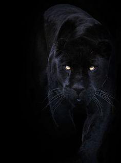 Black. Yes, it's not a colour, it's a shade--but I still love it.