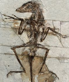 Dinosaurs Reveal Clues about Adaptation to Climate Change