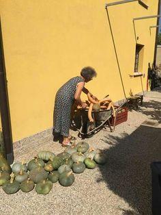 La signora delle zucchine