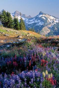 Beautiful photo I love the mountain flowers.