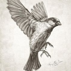 sparrow flying - Google Search