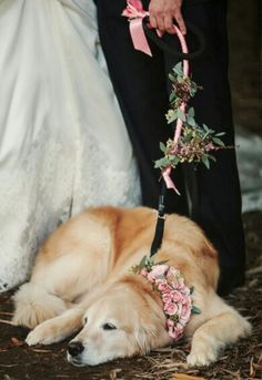 Have a collar made of flowers for my dog. Have Girls be in charge of bringing the dog.