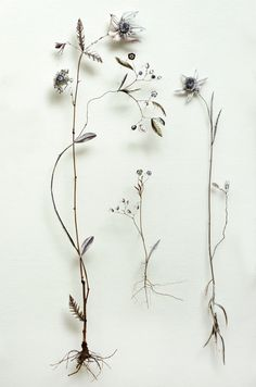 Flower construction ~  Anne Ten Donkelaar