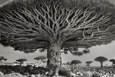 Uma paisagem sem uma árvore, é um bolo sem a cereja.