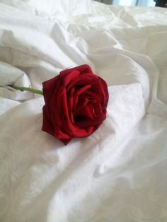 Chapter a rose on the pillow para mi Maravilla for last night! Beautiful Rose Flowers, Red Flowers, Red Roses, Beautiful Flowers, Aesthetic Roses, Red Aesthetic, Roses Tumblr, Single Red Rose, Flower Wallpaper