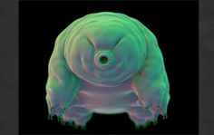 Tardigrade Power: How Water Bears Survive Complete Dehydration by Turning Into Glass