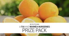 Kiwi Living and Tui have got the perfect prize pack to give your garden added zest! They're giving away everything you need to start growing your own lemon and lime tree. Prize pack valued at $400!