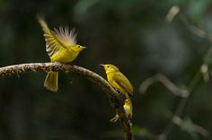 The riot of Yellows Photo by Shyam Sundar — National Geographic Your Shot