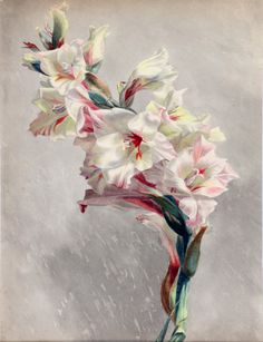 Unknown painter 19/20th century - Gladiolus, watercolor, 44 x 31 cm.