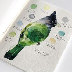 Dusky-billed parrotlet 🖤 Which one from the Palette collection do you like more? Sketchbook Drawings, Art Sketches, Art Drawings, Fashion Sketchbook, Watercolor Sketch, Watercolor Bird, Watercolor Paintings For Beginners, Illustration Art, Illustrations