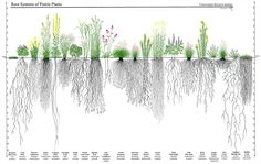 Native plants have deep root systems