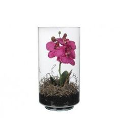 Orhidee Phalaenopsis in vas Terrarium, Plant, Terrariums