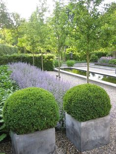 formal lavender hedge clipped Buxus (boxwood) balls in contemporary concrete planters || Moderne Tuinen - Strak en Modern Tuinontwerp