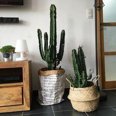 Le sac en papier, cactus, plante, panier boule, bloomingville, bois, industriel