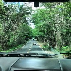 Estrada linda