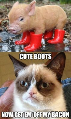 bwahaha but honestly I'd take the pig over the cat any day