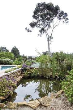 'n Waterwys lushof van vetplante en fynbos Water, Plants, Outdoor, Gripe Water, Outdoors, Plant, Outdoor Games, The Great Outdoors, Planets