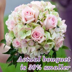 pink roses & hygreasas