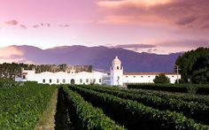 Cafayate wine country | Salta, Argentina