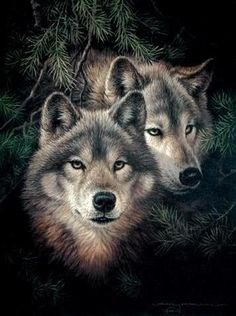 Two wolves DIY Diamond Painting Cross Stitch Wall Sticker Diamond Embroidery Square Crystal Mosaic Pictures Stickers Wolf Photos, Wolf Pictures, Animal Pictures, Free Pictures, Artwork Lobo, Wolf Artwork, Wolf Love, Beautiful Creatures, Animals Beautiful