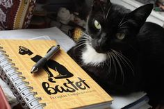 Agende seu horário com a nossa secretária felina: Iracema Emoticon grin #bastetterapias #cat #work #bemestar