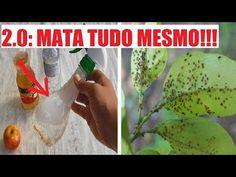 MATA TUDO MESMO Pulgões, Cochinilhas, Fungos e Lagartas a Melhor solução - YouTube Watermelon, Fruit, Plants, Diy, Youtube, Landscape Materials, Container Gardening, Gardening Tips, Homemade Bug Spray
