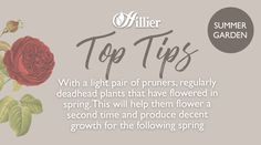 Top tips for your summer garden - pruning and deadheading Deadheading, English Roses, Summer Garden, Advice, Place Card Holders, Gardening, Board, Tips, Plants