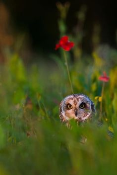 Eyes in the Meadow