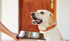 Smart Dogs With Polite Table Manners (Adorable Video)