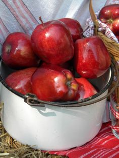Three Pixie Lane: Apples in a white bucket