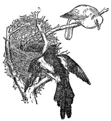English Fairy Tales/The Magpie's Nest - Wikisource, the free online library
