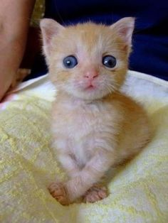 Kitten Cat - what a face - Love it!