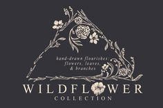 Wildflower Collection by Feanne on Creative Market
