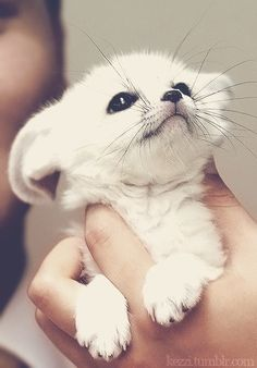 I don't know what animal this is, but it's soooo cute!!!