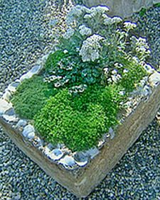 Hydroponics is a specialized type of gardening that grows plants in soil-free nutrient solutions. Learn how anyone can create a low-cost hydroponic garden at home using basic Styrofoam boxes. Water Garden, Herb Garden, Lawn And Garden, Vegetable Garden, Garden Plants, Garden Art, Hydroponic Farming, Hydroponic Growing, Growing Plants