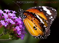 My photography, butterfly