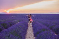 Luke Shadbolt and Nicole Warne - Lavender Field in Provence, France.  (2013)