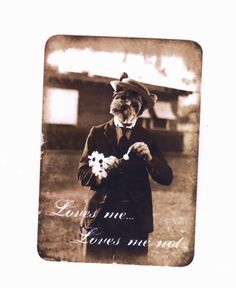 Blank Note Cards , Anthropomorphic Dog , Dog with Daisies , Yorkie Dog , Vintage Style