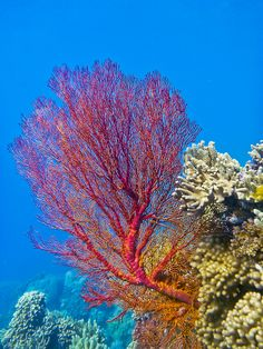 Fan Coral, Coral Art, Cozumel Diving, A Level Textiles, Coral Bleaching, Oceans Of The World, Beautiful Ocean, High Art, Underwater World