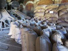 Sacks of cocoa beans await export to Europe at Roça Agua Izé on Sao Tome Island, São Tomé and Príncipe.