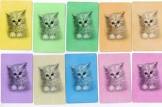 Any girl worth her salt had to have a few obligatory fluffy kittens! Horse Clipping, Kitten Photos, Fluffy Kittens, Poor Children, Great Memories, My Memory, Cat Art, My Images, Childhood Memories