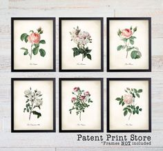 Redoute Roses Prints. Botanical Print. Art Print. Wall Art. Flower Prints. Rose Prints. Illustration. Poster. Dining Room Art. Bedroom. 174 You will receive all six prints in the size you select. Please select your background preference at checkout. Frames are not included. All