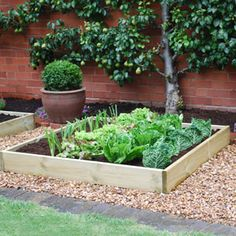 Veggie patch ideas on pinterest worm farm compost and worms for Vegetable patch ideas