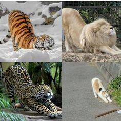 New meme compilation (cat memes,dog memes,pets memes,animal memes) Cute Funny Animals, Cute Baby Animals, Cute Cats, Funny Cats, Animals Kissing, Wild Animals, Beautiful Cats, Animals Beautiful, Beautiful Creatures