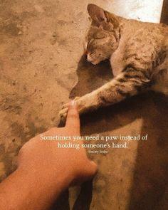 Cats, Qoutes, Animals, Quotations, Gatos, Quotes, Animales, Animaux, Animal